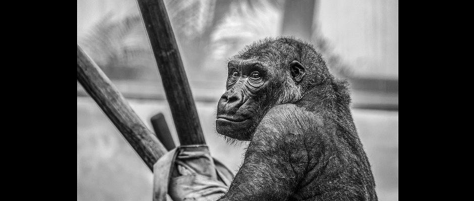 Affenmenschen